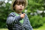 kleiner Junge mit Pusteblume