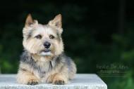 Terrier Lenny