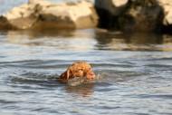 schwimmender Welpe