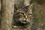 Katze Luzzi