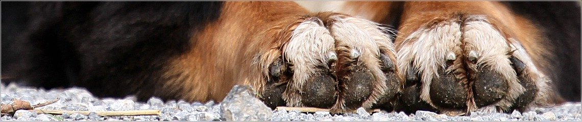 Tierfotografie Düseldorf | Heike Beulen - Rechtliches